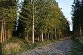 A walk through Twyford Wood, No 4 - geograph.org.uk - 272055.jpg