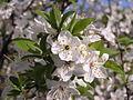 Ab plant 1199.jpg