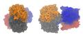 Acetyl-CoA-Acetyltransferase 2IBW.png
