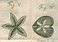 Acta Eruditorum - V fossili, 1732 – BEIC 13402340 (cropped).jpg