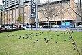 Adelaide SA 5000, Australia - panoramio (18).jpg