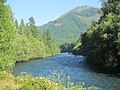 Along McKenzie River (7967034830).jpg