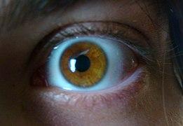 Amber eye1.jpg