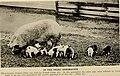 American breeders magazine (1913) (18118276005).jpg