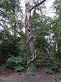 Amersfoort - Boomsculptuur 'Rupsenboom' van Frank Driessen in Park Randenbroek.JPG