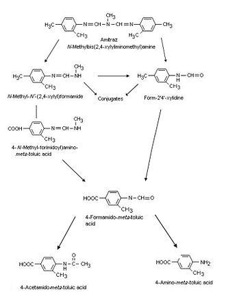 Amitraz - Figure 3; Amitraz Metabolism in Animals