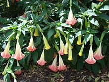 List of plants by common name - Wikipedia