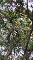 Animal Bats on a Tree.jpg