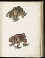 Animal drawings collected by Felix Platter, p2 - (113).jpg