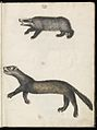 Animal drawings collected by Felix Platter, p2 - (137).jpg