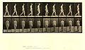 Animal locomotion. Plate 15 (Boston Public Library).jpg