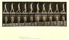 Animal locomotion. Plate 15 (Boston Public Library).jpg
