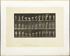 Animal locomotion. Plate 227 (Boston Public Library).jpg