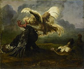 Birds fighting