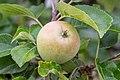 Apple NZ7 0195 (50169561873).jpg