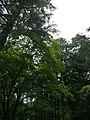 Arahari, Ritto, Shiga Prefecture 520-3003, Japan - panoramio (14).jpg