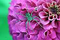Aranha sobre Flor.jpg