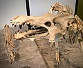 Archaotherium mortoni, early Oligocene of South Dakota (41614574842).jpg