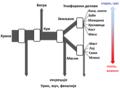 Aristotle's metabolism.sr.png