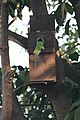 Artificial nest box for birds by Raju Kasambe DSC 8153 (2) 05.jpg