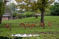 At Chester Zoo 2019 050.jpg