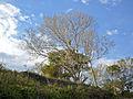 Atardecer en árbol seco.jpg