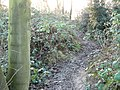Attenborough Nature Reserve Path - geograph.org.uk - 1126900.jpg