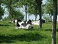 Aubry-le-Panthou P1060904.JPG
