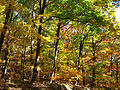 Autumn-trees-colors - West Virginia - ForestWander.jpg