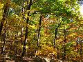 Autumn-trees-colors - West Virginia - ForestWander.jpg