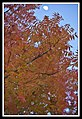 Autumn Leaves begin to fall-001 (5659051465).jpg