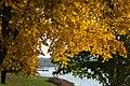 Autumn Morning Fishing (234604561).jpeg