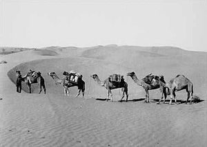 Simpson Desert - Ted Colson's expedition across the Simpson Desert in 1936