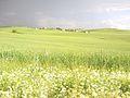 BAŞMERLU MAYIS 2011 - panoramio.jpg