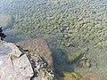 Baggersee - panoramio.jpg