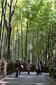 Bamboo forest near Tenryuji temple.jpg