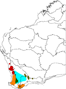 Map of Western Australia, showing ranges of five varieties of Banksia sphaerocarpa, all concentrated in the southwest corner of the continent