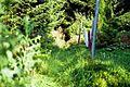 Bardenfleth Urwald - panoramio.jpg