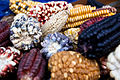 Basket of variegated maize - Cusco, Peru.jpg