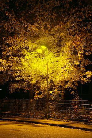 image of Baum Natriumdampflampe 3334