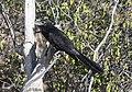 Beak Bird Combate 3590.jpg