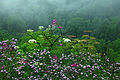 Beautiful-late-spring-rain-wildflowers - West Virginia - ForestWander.jpg