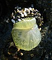 Beautiful Sea Anemone.jpg