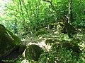 Beautiful jungel Javaher deh - panoramio.jpg