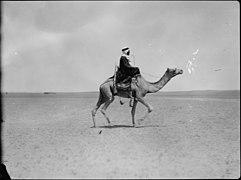Bedouin on camel LOC matpc.15043.jpg