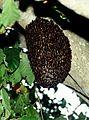 Beehive-Sunderbans-2008.jpg