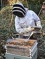 Beekeeper using bee smoker.jpg