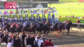 Belmont Stakes 2014 start detail.png