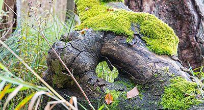 Holz Trocknen Ohne Risse holzfehler
