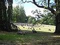 Bergpark Wilhelmshöhe - Tulpenalle 2018-08-10 a.JPG